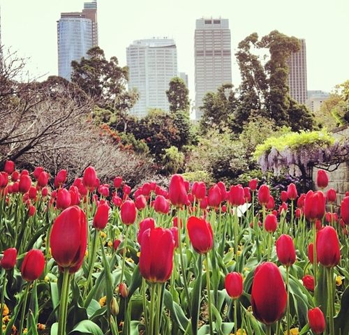 How will you spend Spring in Sydney?